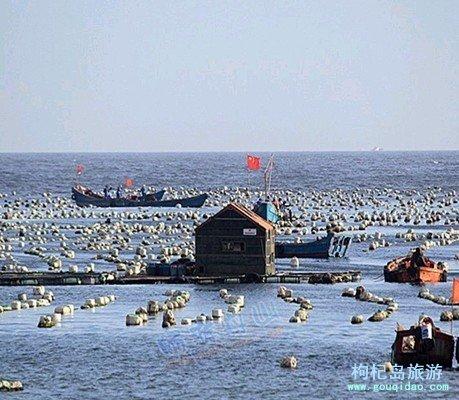 枸杞乡是渔业重点乡镇,养殖业是该乡的传统优势产业,全乡养殖面积达到近万亩,尤其是淡菜产量占全省首位。2001年该乡被省海洋渔业局命名为\浙江省贻贝之乡\。那一片片养殖场尤加海上牧场。